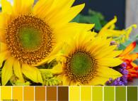 Debbie-Cole-Sunny-flowers-Palette