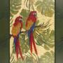 6fda32636cebbbc54c9ae2f910f8ec90–parrots-product-page